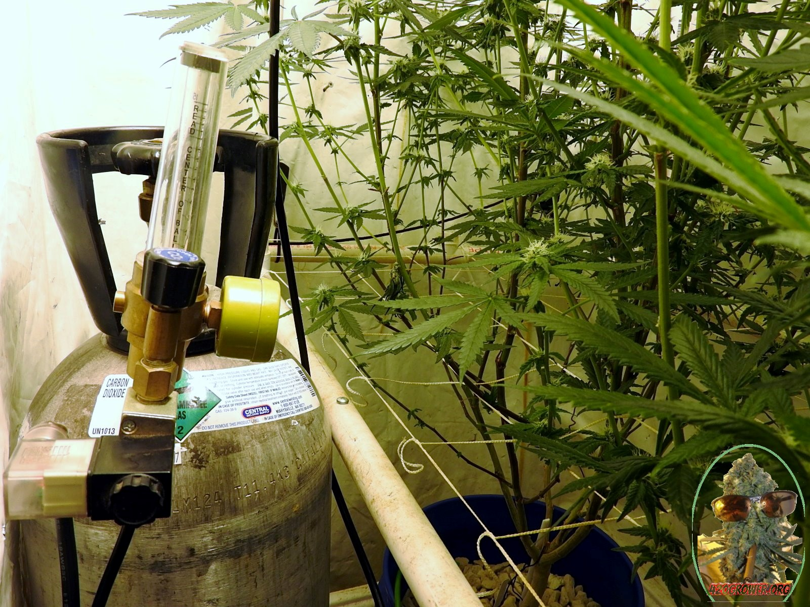 Adding CO2 In A Vented Grow Room