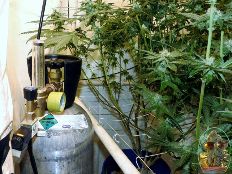 The Truth About Adding CO2 In A Vented Grow Room