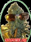 420 GROWER