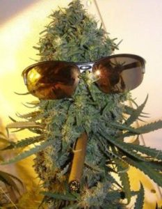 420 Grower This Buds For You